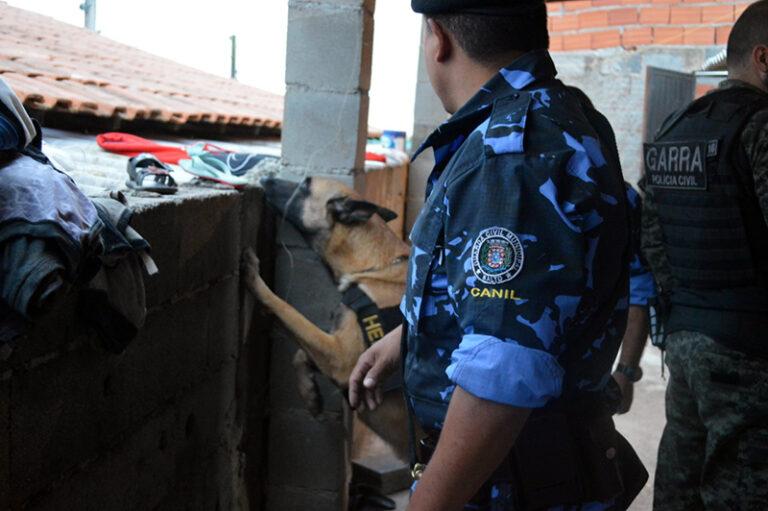 Cães: heróis da GCM ajudam no combate às drogas