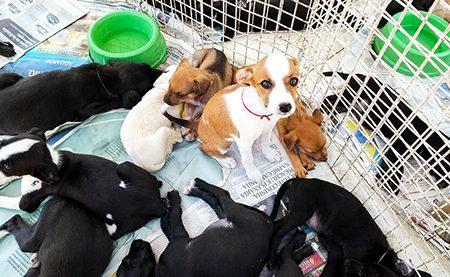 Mora em Itu e quer adotar um pet? A feira ocorre hoje, dia 18, na Praça do Carmo
