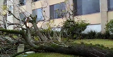 Árvore cai após chuvas, em frente à Biblioteca Municipal, em Salto