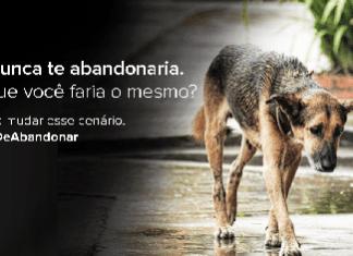 Crueldade: Salto também vê aumento do abandono de animais na pandemia