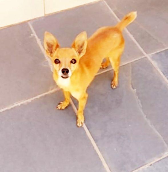 Read more about the article Vamos ajudar o cãozinho Rici a voltar para casa?