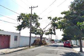 Poda em V: segurança ou agressão contra as árvores?
