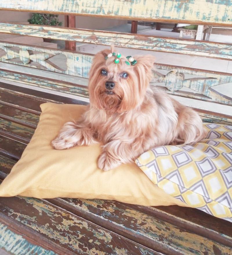Blog do nelson Lisboa mostra retorno cachorrinha MEL