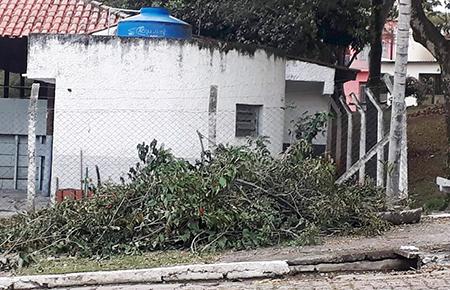 Moradores do Jardim Elizabeth questionam poda de árvores na praça do bairro