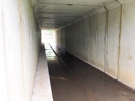 Rodovias da AB Colinas possuem passagens de fauna para animais silvestres