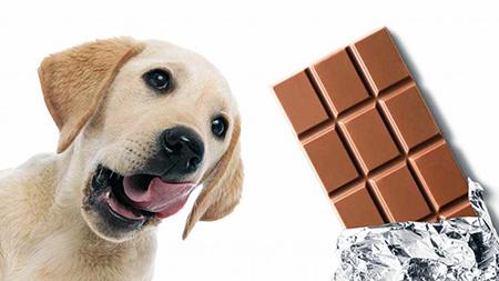 Read more about the article Você sabia que seu cão pode morrer se consumir chocolate?