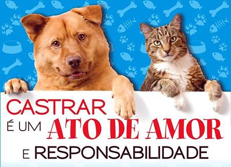 Que tal castrar gratuitamente o seu cão ou o seu gato?