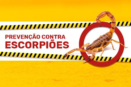 Escorpiões: dicas para prevenir acidentes e para agir em caso de picadas