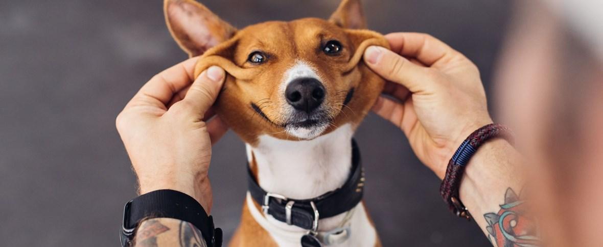 "Que tal uma escola ""pet friendly""? Projeto estadual permite cães na sala de aula"
