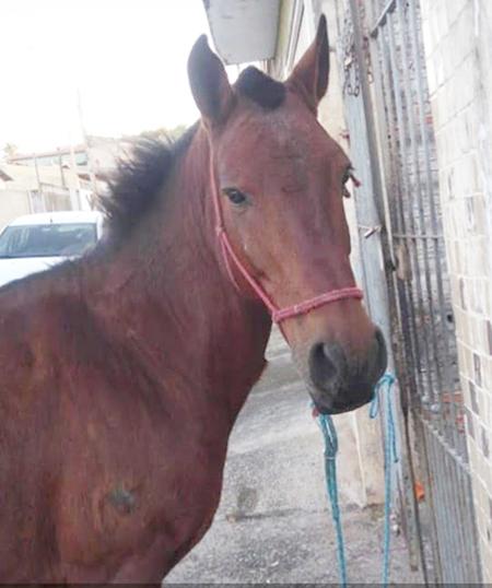 Vamos ajudar o cavalo Pipoca a voltar para casa?