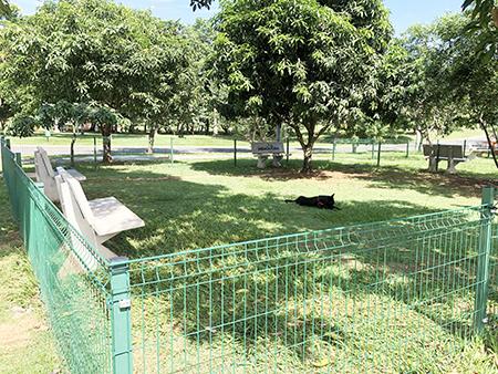 Indaiatuba amplia opções de lazer para os pets para mais 2 novas praças
