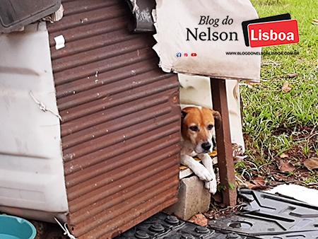 Você sabe como ajudar cães de rua?