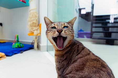 Médica veterinária desvenda os principais mitos do universo felino