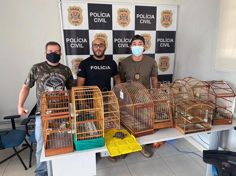 apreensão de pássaros silvestres em Salto e Porto Feliz