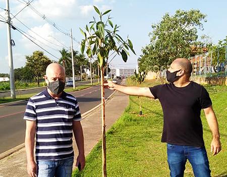 Arborização prossegue em Salto: agora compete ao cidadão preservar as novas mudas