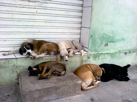 Read more about the article Estamos no inverno e você já pensou sobre os animais de rua?