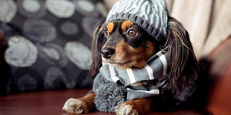 Read more about the article Cão e gato sentem frio?