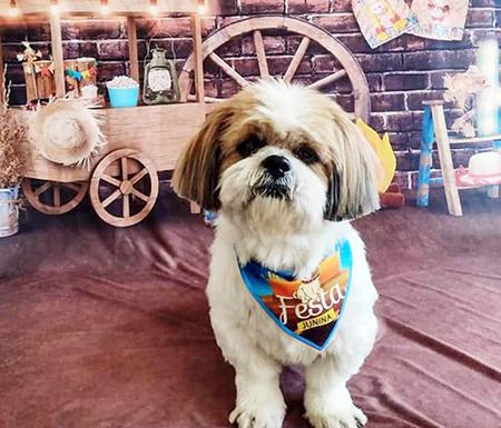 Read more about the article Família procura o cãozinho Marley desesperadamente