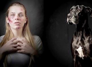Subseção da OAB cria comissão de Defesa dos Direitos dos Animais