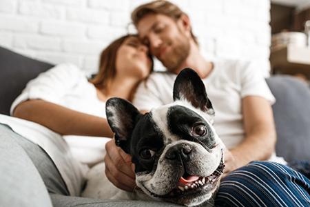 Read more about the article Você sabia que ter um pet em casa ajuda na saúde mental durante o isolamento?