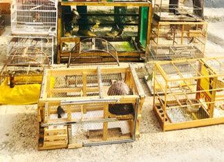 Mais um preso é flagrado com aves silvestres em Salto