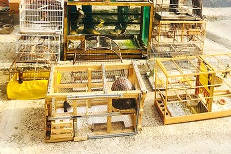 Read more about the article Mais um preso é flagrado com aves silvestres em Salto