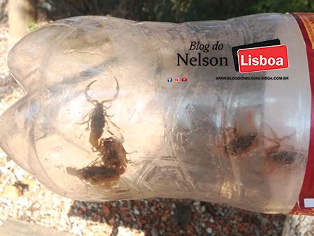 Read more about the article Os moradores jogam entulho e lixo, escorpiões se proliferam e invadem o Parque Laguna em Salto