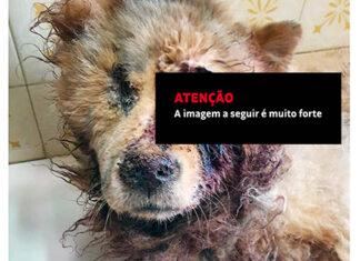Absurdo: socorro chega tarde e cão morre vítima de maus tratos no Jardim das Nações