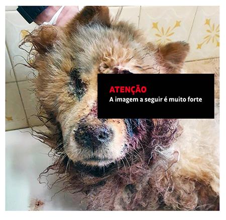 Read more about the article Absurdo: socorro chega tarde e cão morre vítima de maus tratos no Jardim das Nações