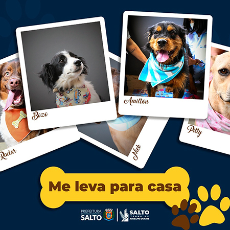 """Read more about the article Campanha """"Me leva para casa"""": sua chance de adotar um cão de estimação em Salto"""