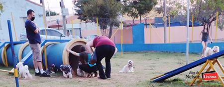 Read more about the article Você já levou seu cão para passear na Praça dos Cães em Salto?