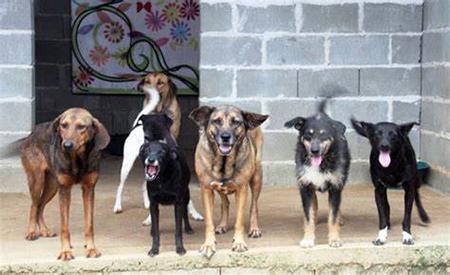 Read more about the article Cães atendidos pela ONG Ajuda Anjos agradecem doações feitas em campanha do Rotary e da Castelinho