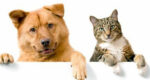 Polêmica: quem é mais feliz, quem tem cão ou gato? Pesquisa feita responde