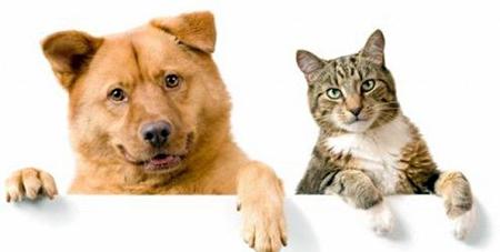 Read more about the article Polêmica: quem é mais feliz, quem tem cão ou gato? Pesquisa feita responde